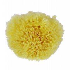 Body Fine sea sponge