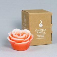 Candela Rosa Vigorosa