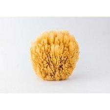 Natural sea sponges coral reef
